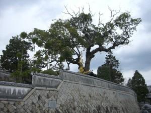 四方に伸びる木の枝