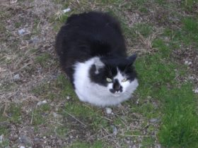 岩屋港でじっとしていた猫