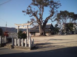 鳥居とクスノキの巨木