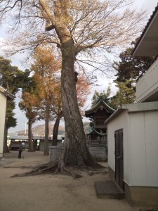 十一神社 別の巨木1