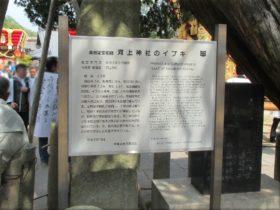 河上神社天満宮 イブキの説明板
